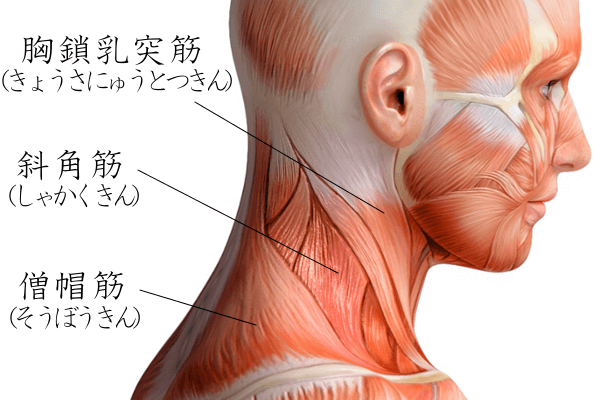 首の筋トレ(画像)