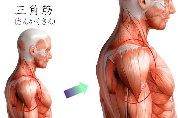 腕の鍛え方(画像)