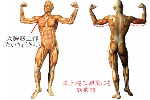 胸筋鍛え方(画像)