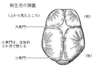 赤ちゃん 頭蓋骨
