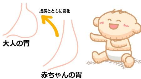 赤ちゃんと大人の胃の形の違い