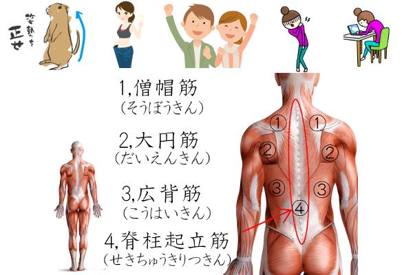 背筋 鍛え方(画像)