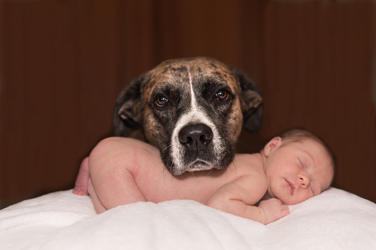 年賀状,犬と赤ちゃん