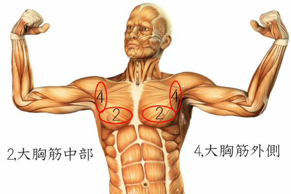 胸筋の鍛えられる部位