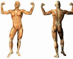 腹筋の鍛え方