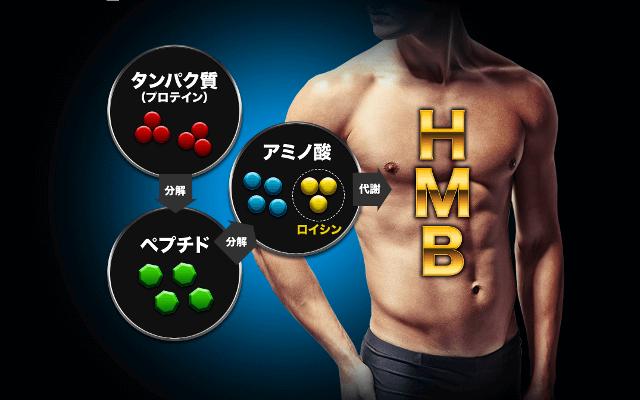 HMBマッスルプレス 効果