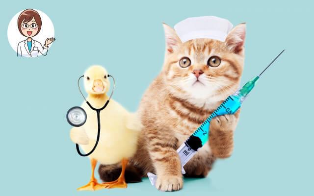 看護師 転職