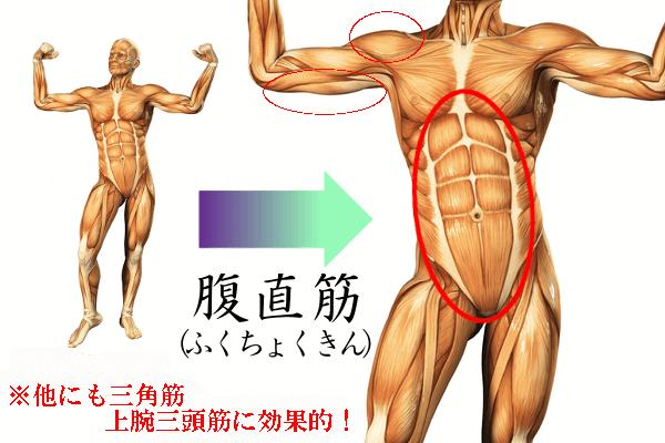 腹筋ローラー