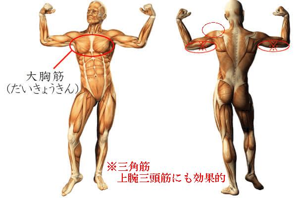 プッシュアップで鍛えられる筋肉