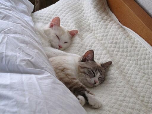 睡眠を取る猫